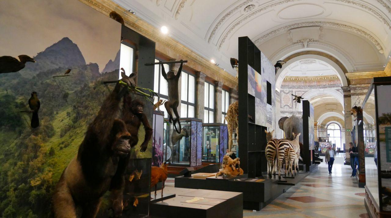 Africamuseum Tervuren Brussel12