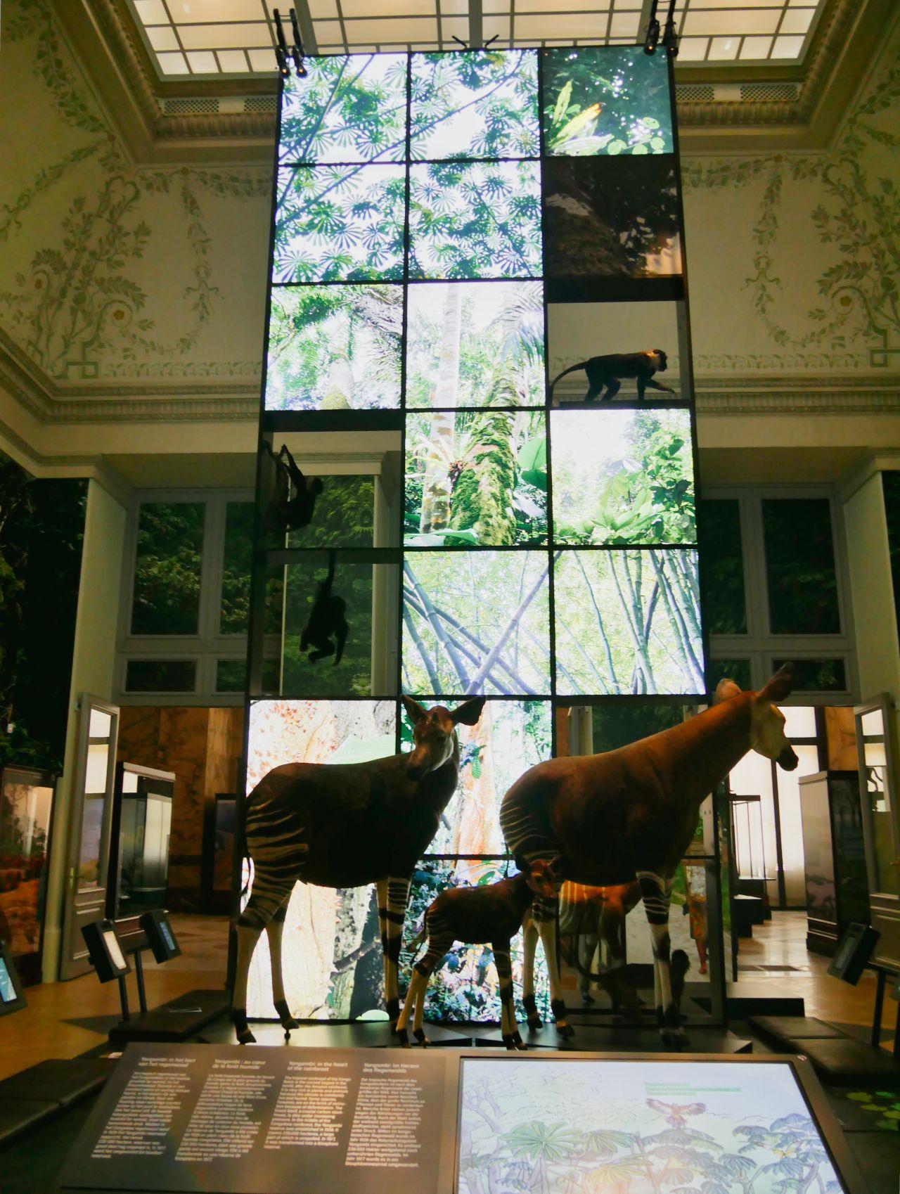 Africamuseum Tervuren Brussel5