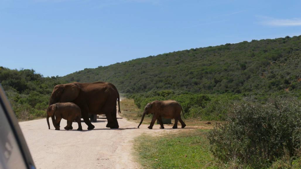 auto huren zuid afrika selfdrive