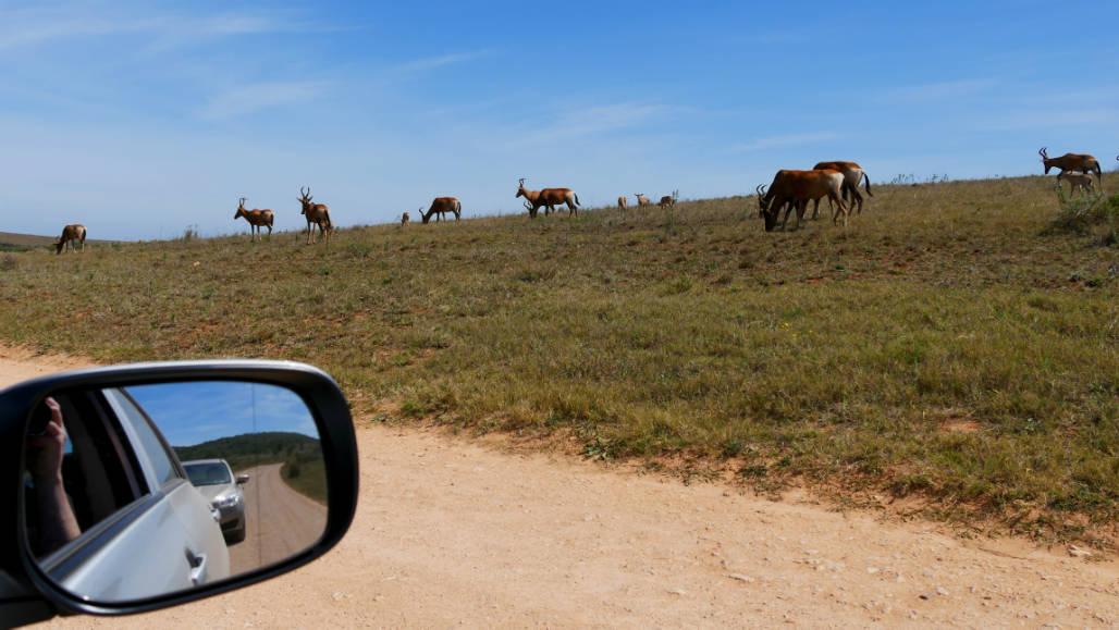 auto huren zuid afrika wegen