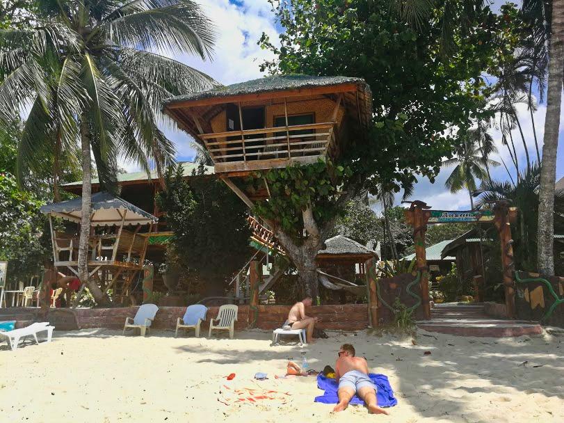 coconut tree Filipijnen