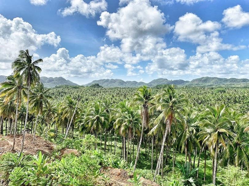 palmbomen poging 2