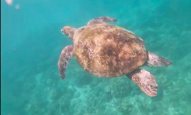 zeeschildpad Filipijnen