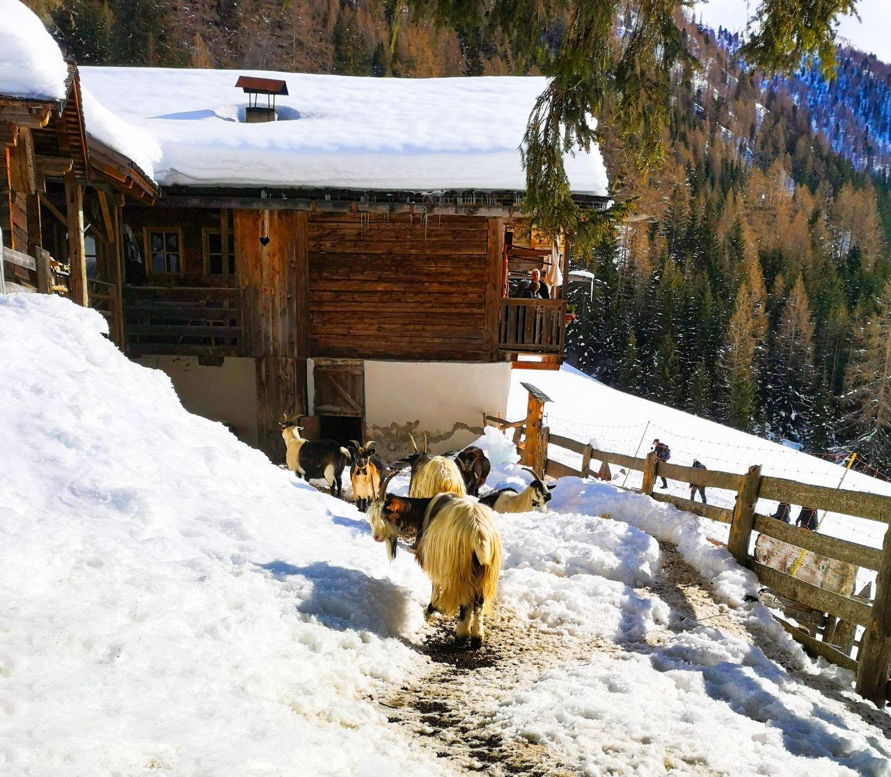 Zuid Tirol Italie Wintersport31