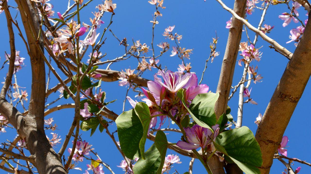 Montagu Tuin Route roses