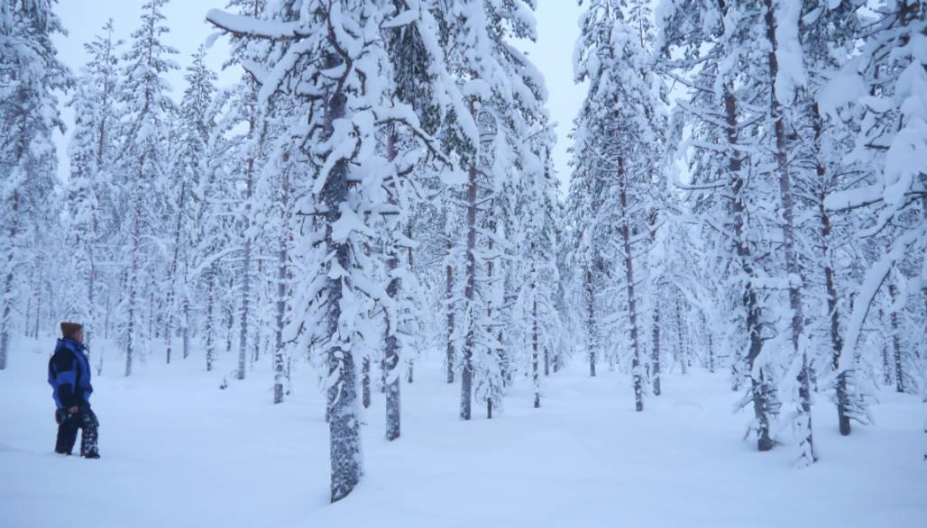 sneeuwschoen wandelen activiteit lapland