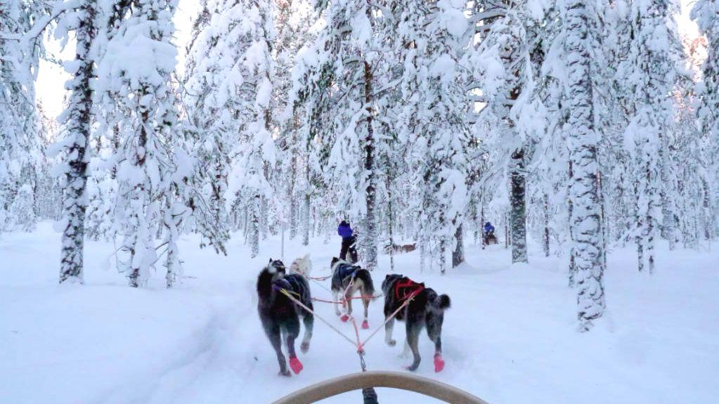 Husky Safari Rovaniemi Lapland
