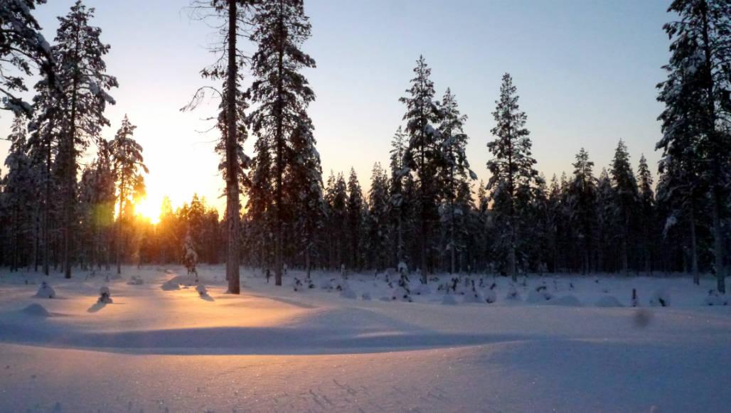 sneeuw landschap rovaniemi lapland
