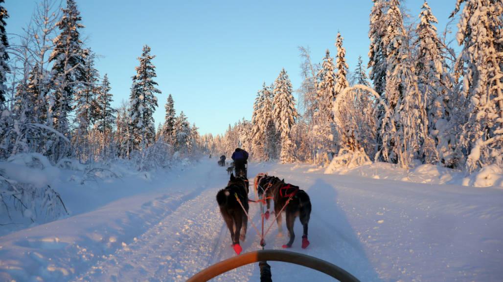 husky tocht rovaniemi lapland