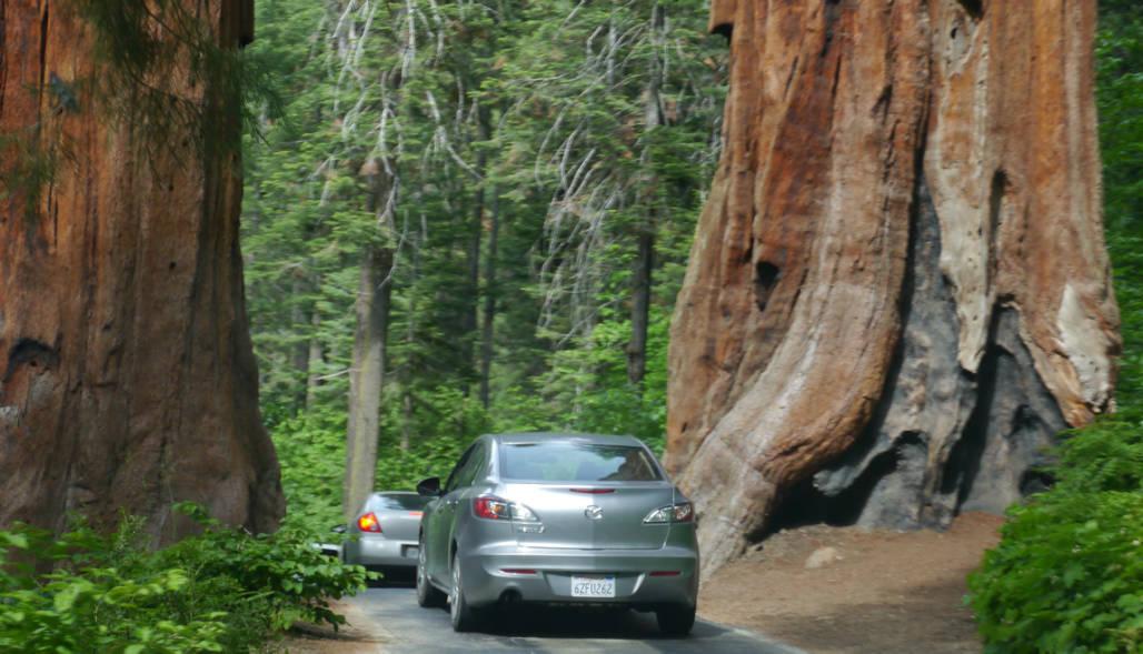 Sequoia route