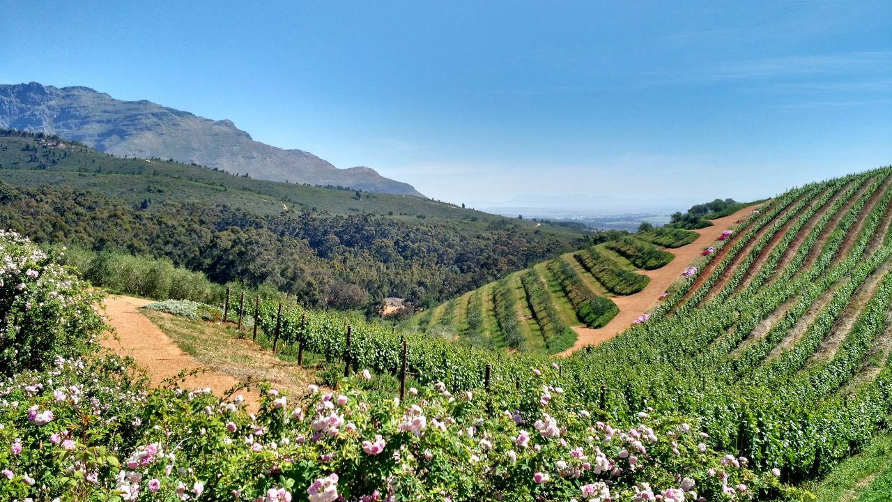 Stellenbosch reistips Zuid Afrika
