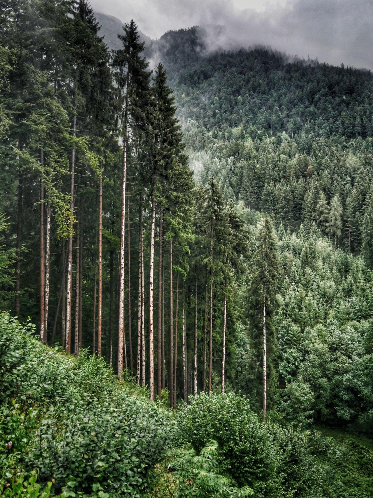 Zillertal Tirol Oostenrijk bossen
