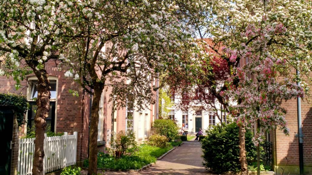 Zutphen stedentrip bloesems