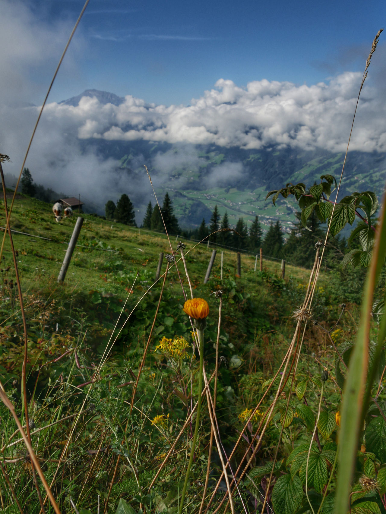 Zillertal bergen Tirol Oostenrijk