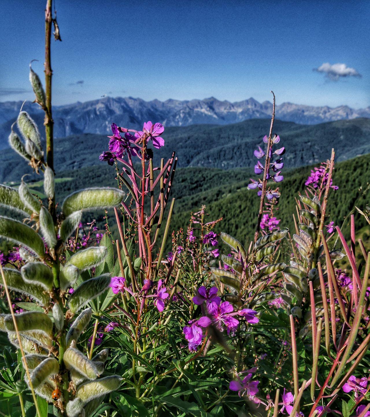 Gitschberg Jochtal Zuid Tirol uitzicht