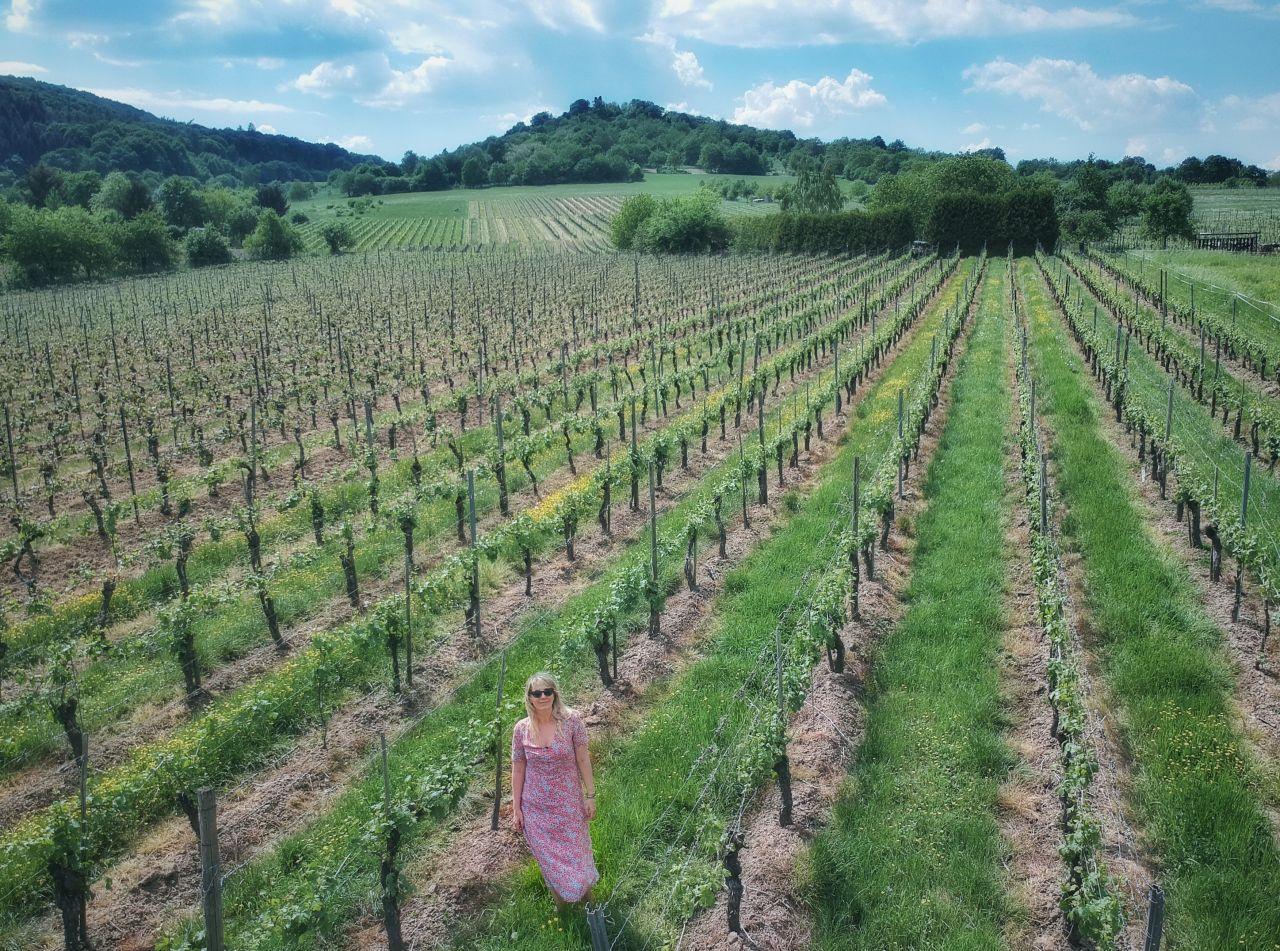 Krov wijnvelden2