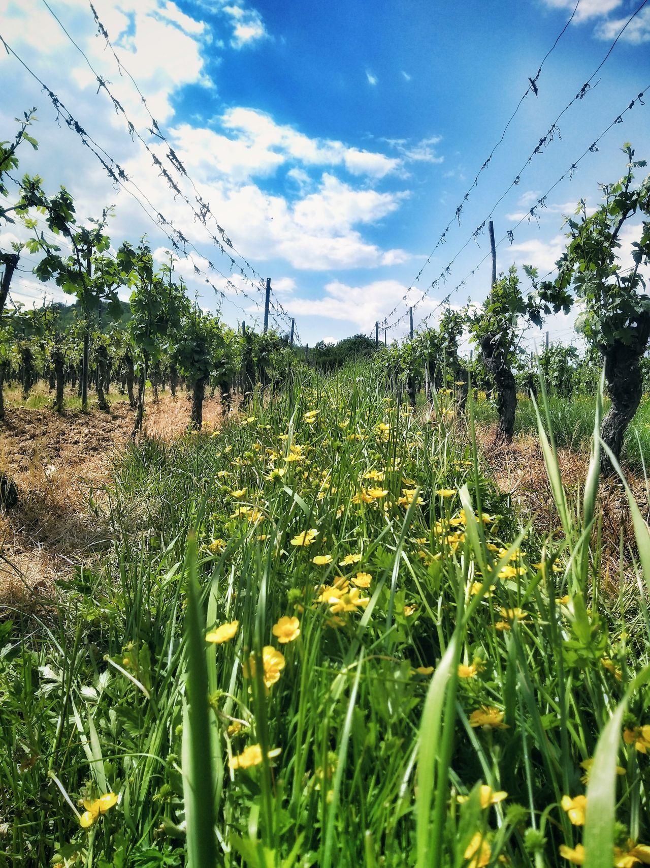 Krov wijnvelden3