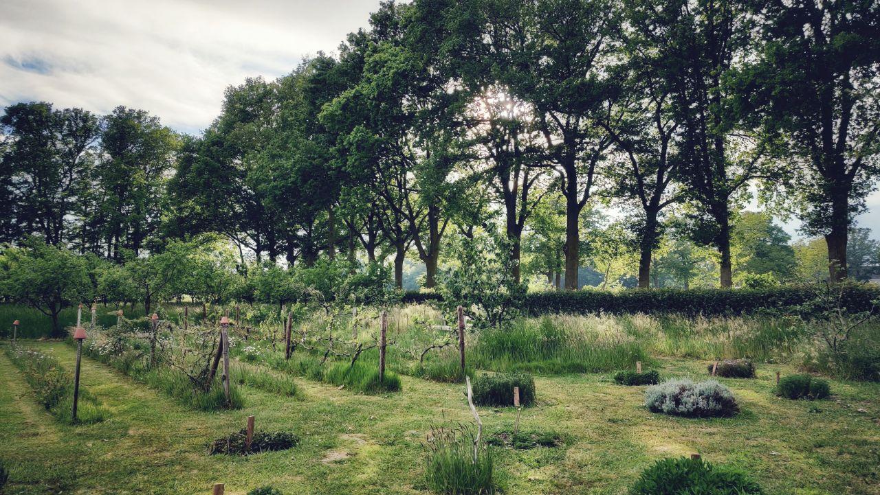 De Kleine Wildenberg Deventer boerderij moestuin3