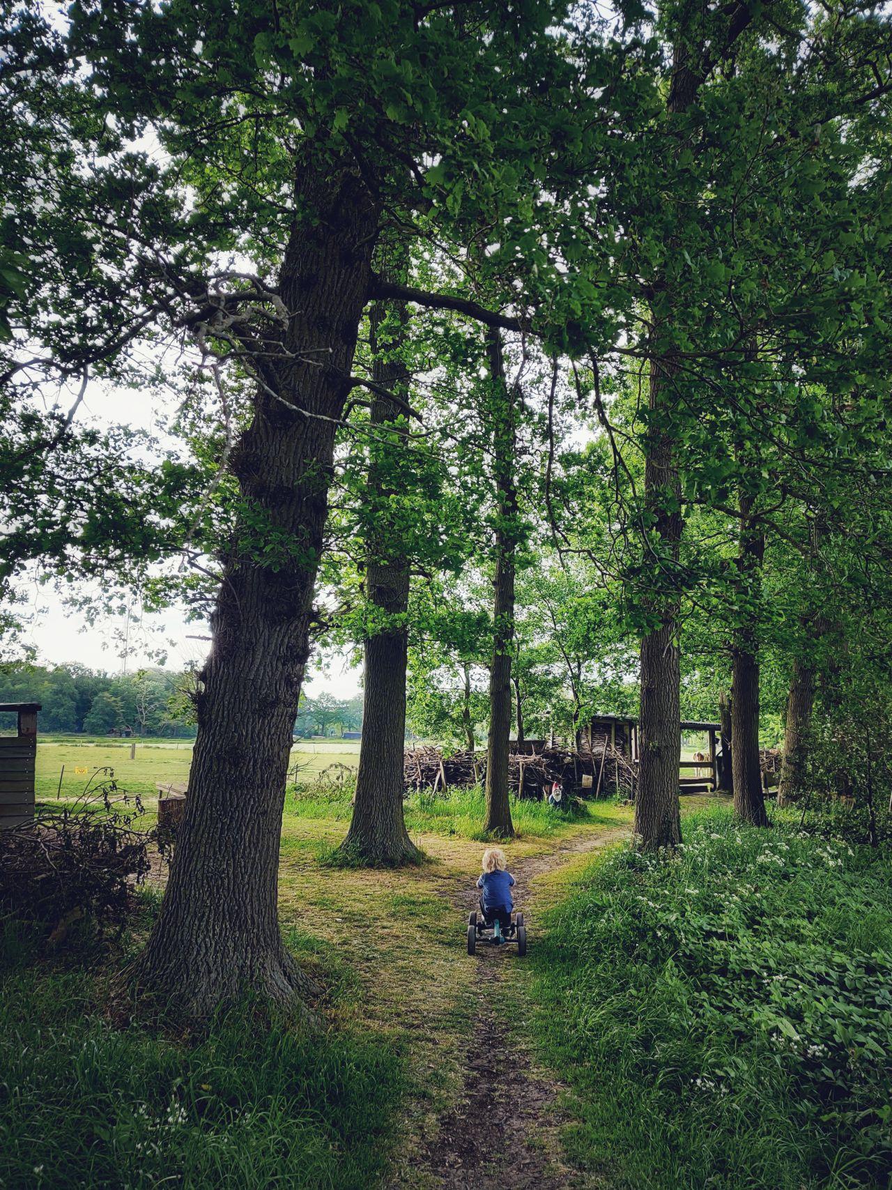 De Kleine Wildenberg Deventer bossen
