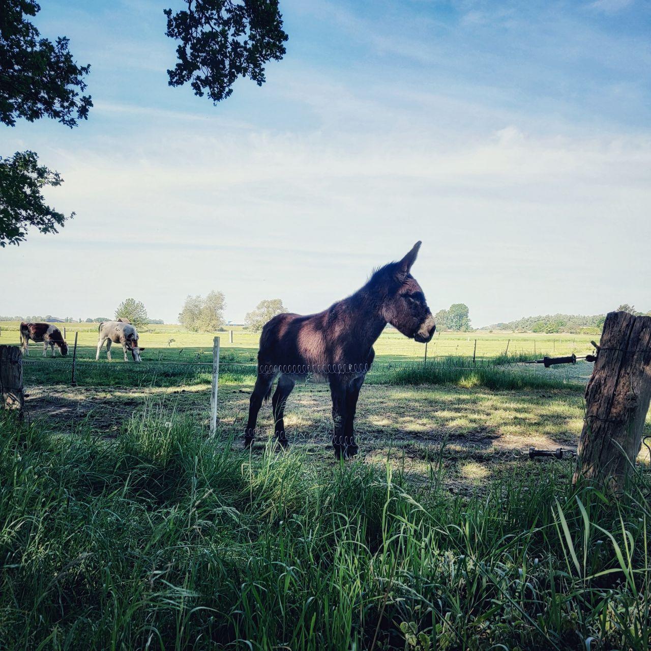 De Kleine Wildenberg Deventer ezeltje