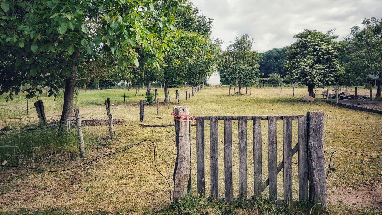 De Kleine Wildenberg Deventer schaapjes