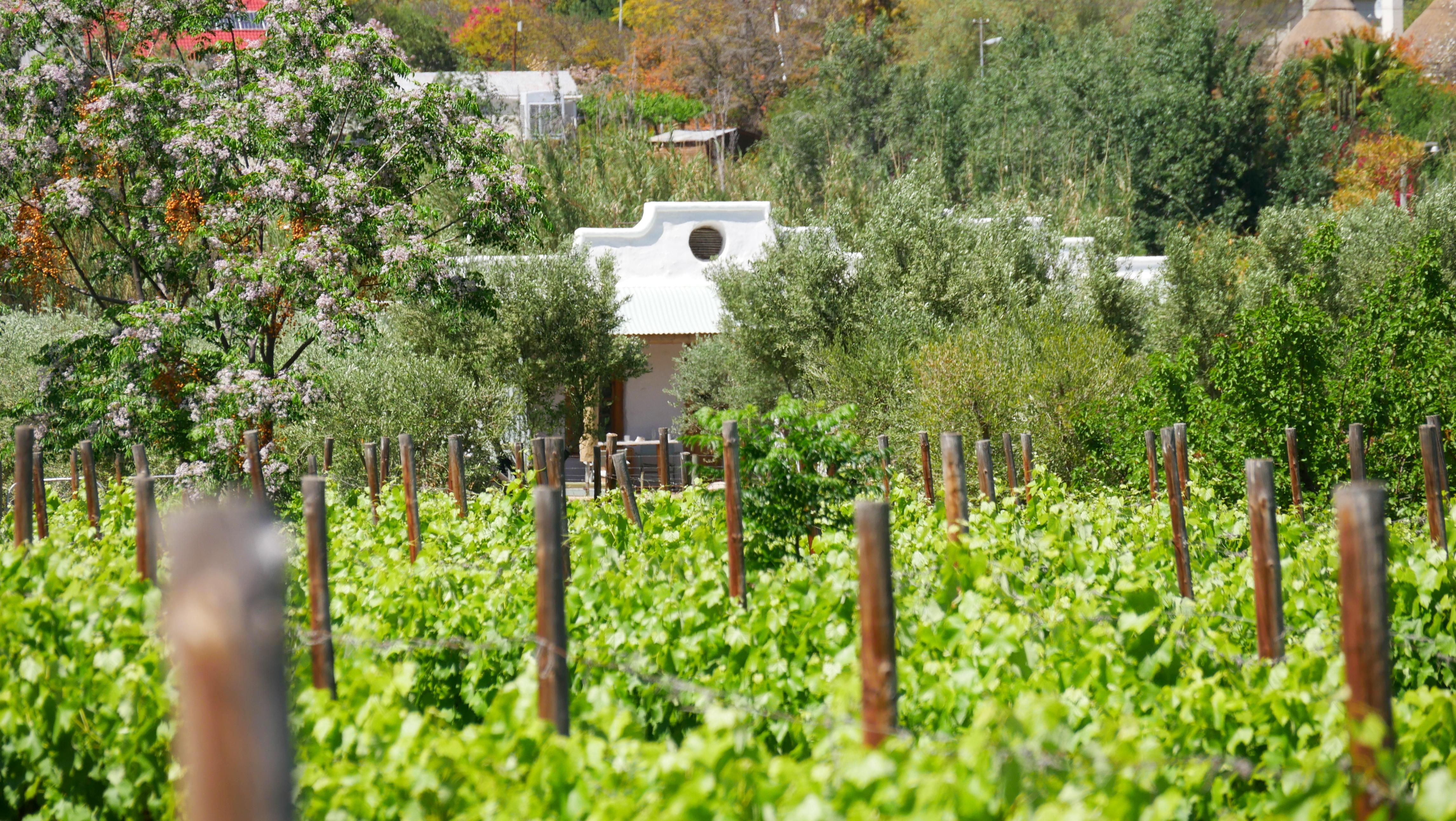Olive Stone Farm garden